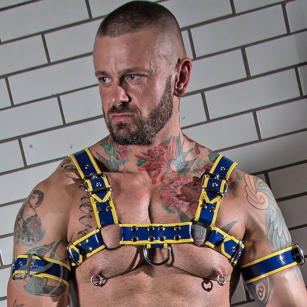 Rubber Bulldog Harness Royal Blue with Yellow Trim